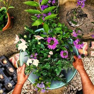 My mother planting up some colourful summer flowers