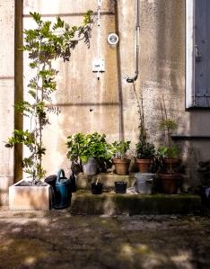 rustic pot plants