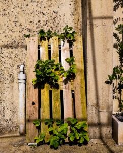 upcycled strawberry planter