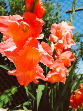 Perennials in full bloom
