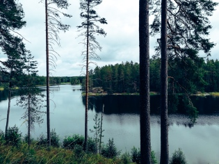 Forest in Finland