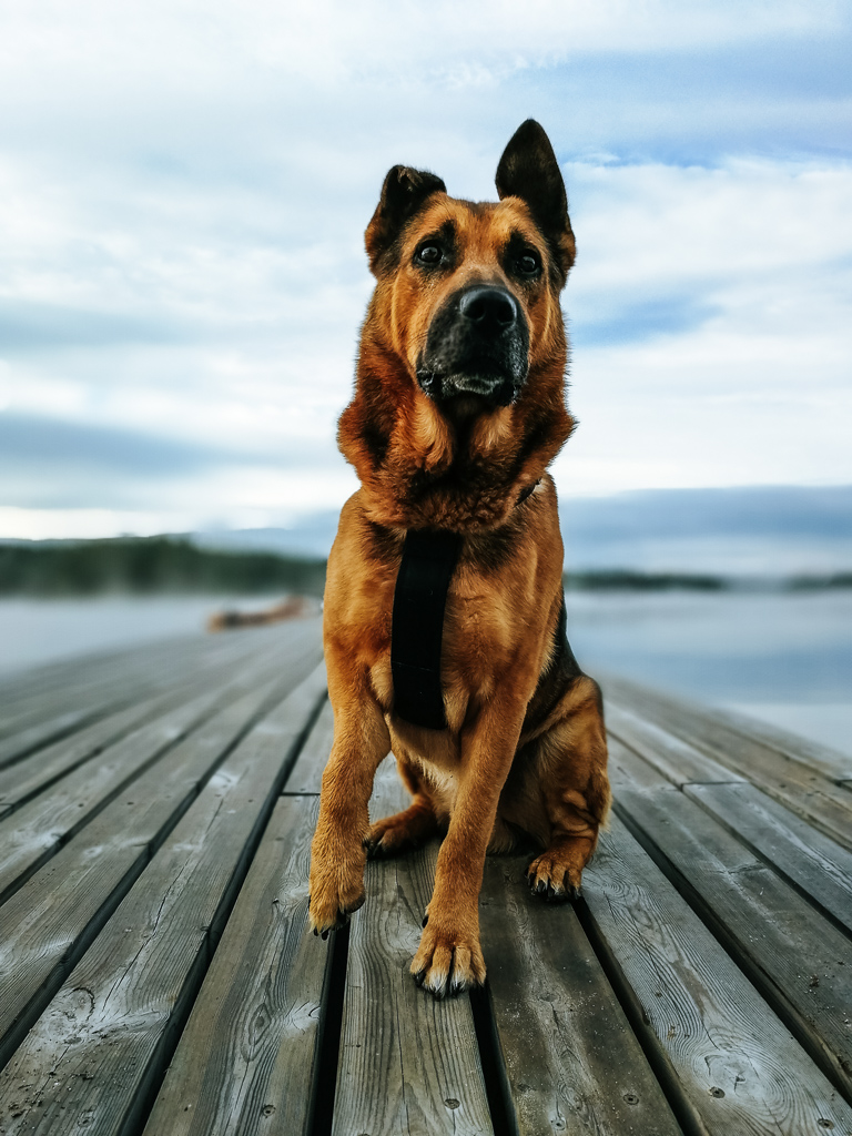 my dog at the pier in Finland