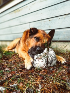My dog and his football