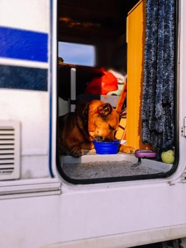 Camper dog