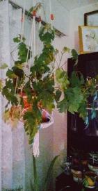 my mums plants